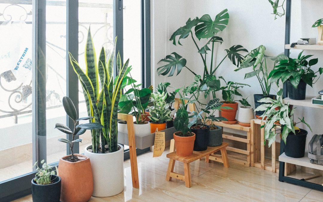 Welke planten zorgen voor een fijn klimaat?
